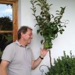 Sehnsucht Birnbaum
